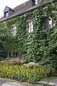 Hausfassade bewachsen mit Aristolochia (Pfeiffenwinde), Hydrangea petiolaris