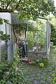 Frau mit Drahtkorb, Anlehngewächshaus mit Weintrauben