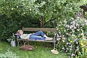 Frau entspannt sich auf Bank unter Apfelbaum (Malus), Rosa 'Raubritter'