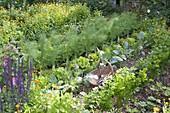 Bauerngarten mit Fenchel (Foeniculum), Salat (Lactuca), Kohlrabi