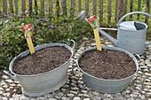 Durchgerostete Zinkwannen bepflanzen