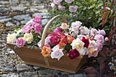 Frisch geschnittene Rosa (Rosen) aus dem Garten in Holzkorb