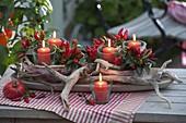 Windlichter mit Zierpaprika, Chili 'Feuerkuesschen' (Capsicum annuum)