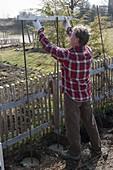 Hopfen an selbstgemachter Sichtschutzwand im Biogarten