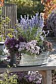 Bepflanzte Zink - Wanne mit Perovskia 'Lacey Blue' (Perovskie), Sedum