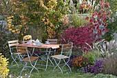 Sitzgruppe am Herbstbeet : Euonymus alatus (Korkleisten-Spindelstrauch