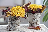 Blüten von Chrysanthemum (Herbstchrysanthemen) mit Blättern