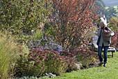 Herbstbeet mit Apfelbaum , Felsenbirne und Stauden