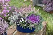 Brassica (Zierkohl), Salbei (Salvia), Calluna Garden Girls
