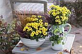 Porzellangefaesse mit gelben Chrysanthemum × indicum 'Vymini'