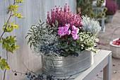 Zink - Wanne mit Erica gracilis (Topferika), Helicrysum 'Weisses Wunder'