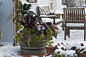 Holzfass mit Gemüse im Schnee : Grünkohl 'Nero di Toskana' (Brassica)