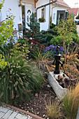 Herbstlicher Vorgarten mit Pennisetum (Federborstengras), Ginkgo biloba (Fächerblattbaum), Sedum (Fetthenne), Aster dumosus (Kissenaster), Hosta (Funkien) und Steintrog mit Schwengelpumpe