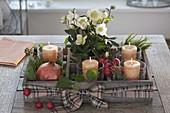 Holz-Kiste als Adventskranz mit 4 Kerzen, Topf mit Helleborus niger