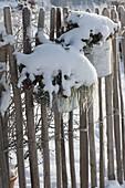 Bepflanzte Blecheimer verschneit am Zaun