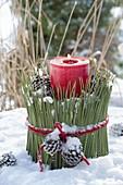Rote Kerze in Topf mit Verkleidung aus langen Nadeln von Pinus