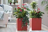 Orange Kunststoff - Gefaesse als Raumteiler bepflanzt mit Anthurium