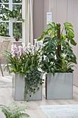 Edelstahl - Gefaesse als Raumteiler bepflanzt mit Cymbidium