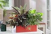 Oranger Kunststoff-Kasten bepflanzt mit Blattschmuck-Pflanzen
