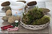Weihnachtsstern in Zapfen-Vase