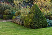 Saling HALL, ESSEX: THE WALLED Garden IN THE EVENING with CLIPPED Box HEDGES AND PYRAMID