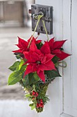 Weihnachtsstern als Tuerschmuck in Tüte aus Hasendraht