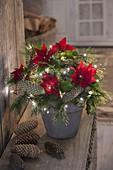 Beleuchteter Weihnachtsstrauss mit Euphorbia pulcherrima (Weihnachtsstern)