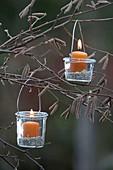 Kleine Windlichter an Zweigen von Corylus avellana (Haselnuss)