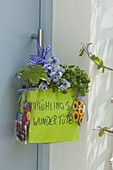 Frühlings - Wundertüte mit Viola wittrockiana (Stiefmütterchen), Petersilie