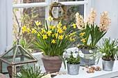 Frühling auf der Fensterbank