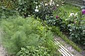 Mischkultur aus Gemüse, Blumen und Kräutern