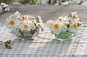 Kleine Windlichter mit Narcissus 'Geranium' (Tazetta / Poetaz-Narzisse)