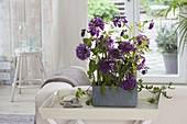 Modernes Gesteck mit Allium 'Purple Sensation' (Zierlauch), Aquilegia