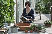 Terracotta - Schale mit Stauden bepflanzen