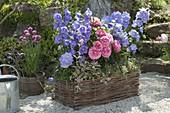 Blumenkasten aus Weidengeflecht : Campanula (Glockenblumen), Rosa