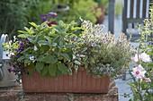 Kasten bepflanzt mit Kräutern und essbaren Blüten