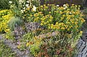 Kiesbeet mit Sedum floriferum 'Weihenstephaner Gold' (Fetthenne)