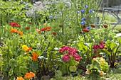Mischkultur im Biogarten mit Sommerblumen und Gemüse