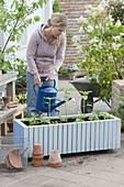 Fahrbaren Kasten mit einjaehrigen Sommerblumen bepflanzen