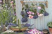 Lavendel zu Straeussen gebunden zum Trocknen aufgehängt