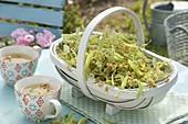 Frisch gepflueckte Lindenblueten (Tilia) im Korb