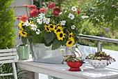 Helianthus (Sonnenblumen), Zinnia (Zinnien) und Cosmos