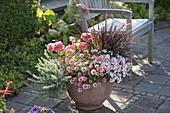 Argyranthemum frutescens 'Molimba Pink' (Margerite), Diascia Breezee 'Pastel'