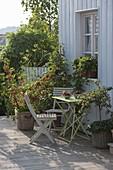 Terrasse mit Beerenobst