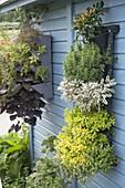 Vertikaler Garten an der Wand vom Gartenhaus