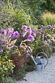 Spaetsommerbeet mit Dahlia (Dahlien), Phlox paniculata (Flammenblumen)