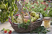 Korb mit frisch gepflueckten Birnen (Pyrus communis) und Birnenkompott