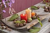 Kerzen auf gebogenem Holzbrett, dekoriert mit Walnuessen (Juglans regia)