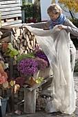 Holz-Balkonkasten mit Chrysanthemum 'Kifix' 'Pan' (Herbstchrysanthemen)