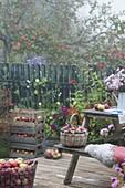 Terrasse mit frisch geernteten Äpfeln